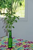Household table setting with bottle and basil Royalty Free Stock Photography