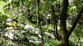 Household waste in wild forest pan stock footage