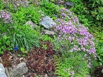 Houseleek and other plants in the rockery Stock Images