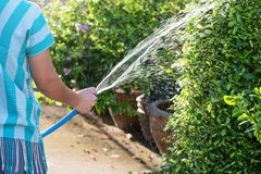 Housemaid spray water to garden royalty free stock photos