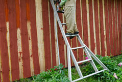 Housepainter man on ladder paint garden house wall Stock Photography