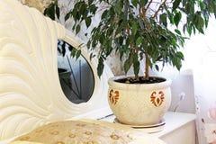 Houseplant σε ένα δοχείο στενό πράσινο φυτό επάνω στοκ φωτογραφία με δικαίωμα ελεύθερης χρήσης