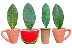 Houseplant - φυτό φύλλων ένα σε δοχείο φυτό Στοκ φωτογραφία με δικαίωμα ελεύθερης χρήσης
