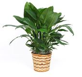 Houseplant Stockbild