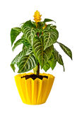 Houseplant Stock Photography