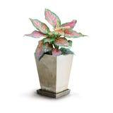 houseplant Photo stock