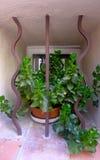 houseplant Fotografia Stock Libera da Diritti