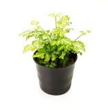 houseplant Immagini Stock Libere da Diritti
