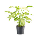houseplant Photos stock