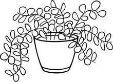 houseplant illustration stock