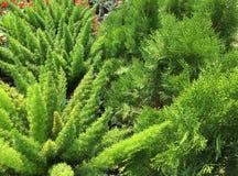 houseplant Royalty-vrije Stock Foto's