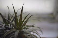 houseplant Foto de Stock Royalty Free