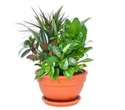 Houseplant arrangement Stock Photos