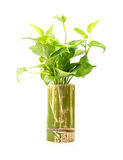 Houseplant in bamboo vase Stock Photo