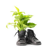 Houseplant in combat boots Royalty Free Stock Images