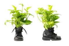 Houseplant in combat boots Royalty Free Stock Photo