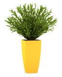 Houseplant décoratif dans le bac jaune d'isolement illustration de vecteur