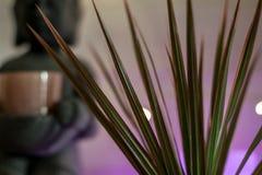 Houseplant da árvore de dragão de Madagáscar com luzes de néon e bokeh fotos de stock royalty free