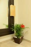 Houseplant de florescência fotos de stock royalty free
