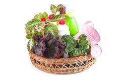 Houseplant decorativo y medios de la protección contra dise de la planta Imágenes de archivo libres de regalías