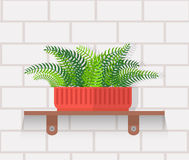 Houseplant Design Flat Concept Stock Photography