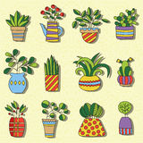 Houseplant doodles cute colorful vector set Stock Images