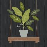 Houseplant en la decoración de madera del oscilación Imagen de archivo libre de regalías