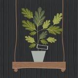 Houseplant en la decoración de madera del oscilación Foto de archivo