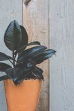Houseplant by fence Royalty Free Stock Photography