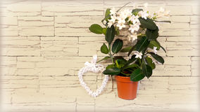 Houseplant floreciente contra la pared Imagen de archivo