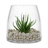 Houseplant in glass vase isolated on white Royalty Free Stock Photos