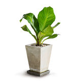 Houseplant Royalty Free Stock Images