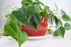 Houseplant Stock Photo