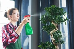 Bonsai care and tending houseplant growth. Watering small tree. Royalty Free Stock Photos