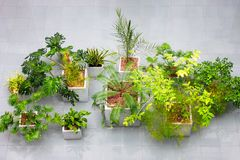 Houseplant interior design. evergreen plants top view at business building. idea for decorating indoors with tropical plants. Monstera, palm, and other plants royalty free stock photos