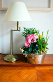Lamp and houseplant Stock Photography