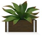 Houseplant no tipo gravado rústico da caixa de madeira Imagens de Stock Royalty Free
