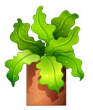 A houseplant in a pot Royalty Free Stock Photography