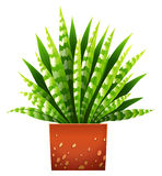 A houseplant with a pot Royalty Free Stock Images