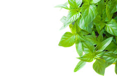 Houseplant shot from above Royalty Free Stock Image