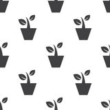Houseplant, vector seamless pattern Stock Images