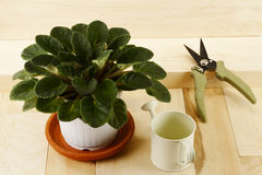 Free Houseplant, Watering Can And Pruner Royalty Free Stock Photos - 29765888