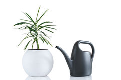Houseplant and watering can Stock Photography
