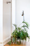 Houseplant in white flat Royalty Free Stock Image