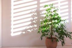 Houseplant y sombra imagen de archivo libre de regalías