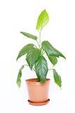 houseplantkruka Arkivfoto
