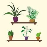 Houseplants στο ράφι στο επίπεδο σχέδιο Στοκ Εικόνα