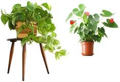 Houseplants 2 voor 1 stock fotografie