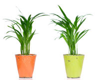 Houseplants Stock Images