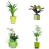 houseplants Arkivbild